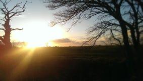 Un tramonto di inverno attraverso gli alberi, attraverso un campo nella campagna Fotografia Stock