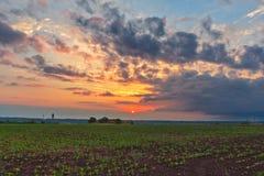 Un tramonto sopra il campo di agricoltura fotografia stock