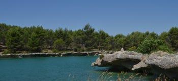 Un trampolín natural Imagen de archivo libre de regalías