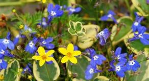 Un trapuntare fiorisce Fotografie Stock Libere da Diritti