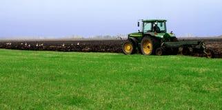 Un trattore è arato in su dal campo con le cicogne Fotografie Stock Libere da Diritti