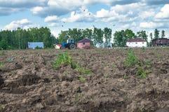 Un trattore ara il campo un giorno soleggiato luminoso Paesaggio rurale della sorgente Immagini Stock Libere da Diritti