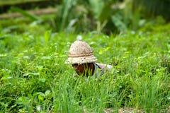 Un travailleur de gisement de riz s'assied entre l'herbe Photographie stock libre de droits