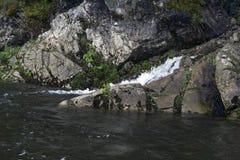 Un tributario limpio de un río en un bosque de la montaña Foto de archivo libre de regalías