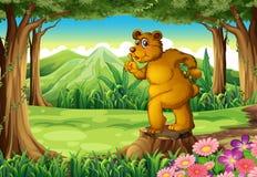 Un tronçon avec une Big Bear Photos stock