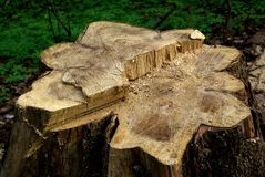 Un tronçon d'un vieil arbre scié image stock