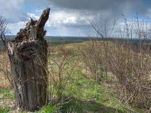 Un tronc d'arbre Photographie stock libre de droits