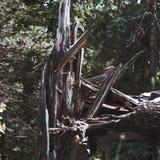 Un tronc d'arbre brisé images libres de droits