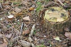 Un tronc d'arbre dans la terre entourant par le fond de feuilles photos stock