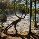 Un tronc d'arbre de cèdre par une cascade qui ressemble à un cre mythique photo stock