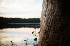 Un tronc d'arbre donne sur un étang au coucher du soleil photographie stock libre de droits