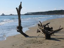 Un tronc d'arbre sec dans le sable sur une plage en Italie Images libres de droits