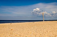 Un tronc d'arbre solo dépassant du sable sur une plage photographie stock