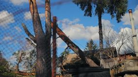 Un tronc d'arbre tombe avec une corde banque de vidéos
