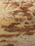 Un tronco Immagini Stock