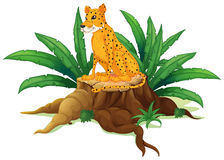 Un tronco con un ghepardo Immagini Stock Libere da Diritti