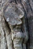 Un tronco de árbol Imagenes de archivo