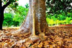 Un tronco de árbol Fotos de archivo libres de regalías