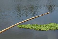 Un tronco de árbol de bambú que flota en la laguna al lado de una vegetación acuosa imagenes de archivo