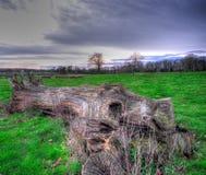 Un tronco de árbol caido en un parkland inglés foto de archivo