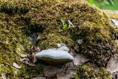 Un tronco de ?rbol cubierto con el musgo y el hongo imagen de archivo libre de regalías