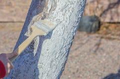 Un tronco de árbol en la pintura blanca, coches de protección del sol en Imagenes de archivo
