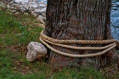 Un tronco de árbol entrelazado con una cuerda y una piedra que miente cerca Primer fotos de archivo libres de regalías