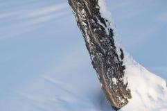 Un tronco de árbol que se inclina cubierto con nieve en bosque del parque del invierno Fotos de archivo libres de regalías