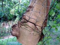 Un tronco di albero che cresce tramite un recinto di filo metallico Immagine Stock Libera da Diritti