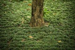 Un tronco solitario de un árbol entre hierba Imagen de archivo libre de regalías