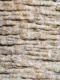 Un tronco texturizado Fotografía de archivo