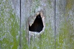 Un trou sur le mur moussu en bois Images libres de droits