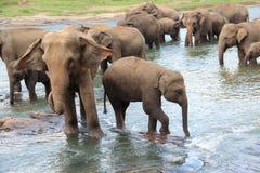 Un troupeau d'éléphants est venu à l'endroit d'arrosage Photographie stock libre de droits