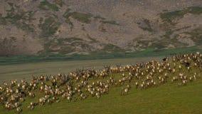Un troupeau d'animaux cherchant l'herbe fraîche, la savane, Afrique photo libre de droits