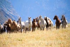Un troupeau de chevaux Photo libre de droits