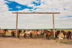 Un troupeau de chevaux dans le pâturage Image stock