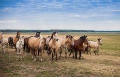 Un troupeau de chevaux dans le pâturage Photographie stock libre de droits