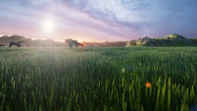 Un troupeau de chevaux fr?lent sur un pr? vert pittoresque un beau matin de ressort, illumin? par les rayons d'or de illustration stock