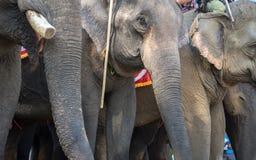 Un troupeau de plan rapproché d'éléphants Éléphant de l'Asie Photos libres de droits