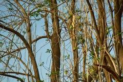 Un troupeau des alimentations de perroquets de Kramer photos libres de droits