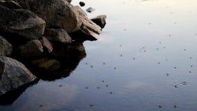 Un troupeau des mètres et des moustiques d'eau clips vidéos