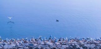 Un troupeau des mouettes se tenant toujours sur le rivage du lac water de Draycote au Royaume-Uni photographie stock libre de droits