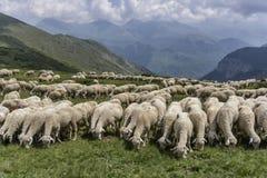 Un troupeau des moutons en montagnes Image stock