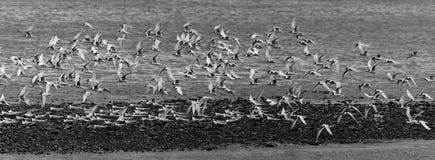 Un troupeau, Greymouth, Nouvelle-Zélande Photos libres de droits