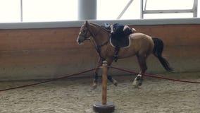 Un trucco dell'uomo che monta un cavallo sull'arena Uomo che fa le acrobazie a cavallo Uomo che guida una menzogne del cavallo archivi video