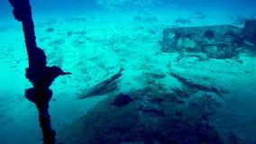 Un trunkfish macchiato sul naufragio C-58 vicino a Cancun video d archivio