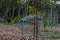 Un tubo invia la sostanza nutriente, Immagine Stock