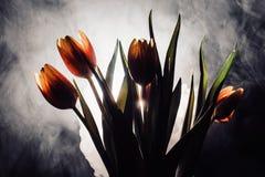 Un tulipán en humo Imágenes de archivo libres de regalías