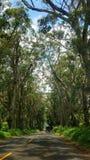 Un tunnel dell'albero Fotografia Stock Libera da Diritti