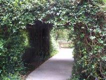 Un tunnel des fleurs blanches de jasmin confédéré images stock
